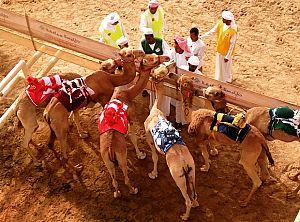 camels_3553947b