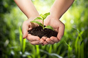 plant in hands - grass background